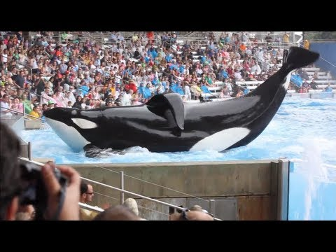 Blackfish: proof that documentary can be a powerful force for change