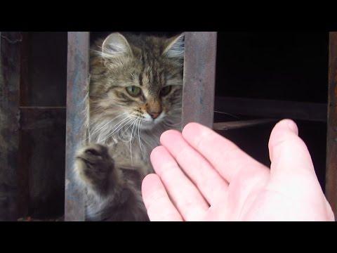Fluffy cat purrs very cute
