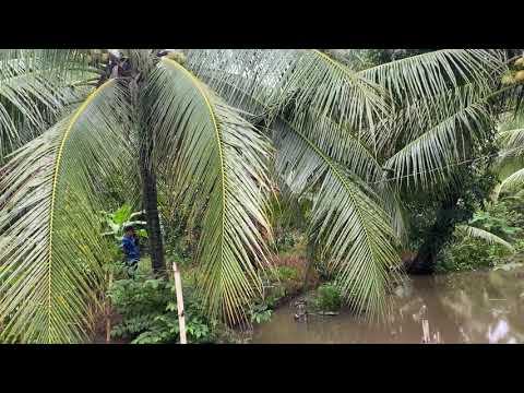 T276❤️🌸 Đất vườn bưởi 1000m2 giá 800tr, đường ôtô. Xã Long định, Tiền giang  #0937373173