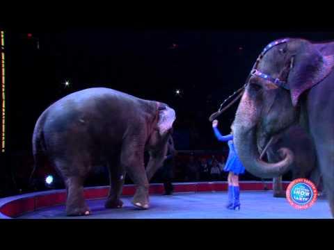 Ringling Bros. Presents Super Circus Heroes - Elephants