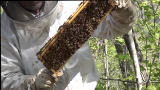 5 hives out of 1 hive split