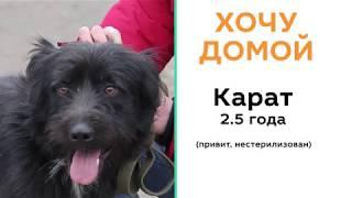 Хочу домой. Бездомные животные ищут хозяина. История пса Карата.