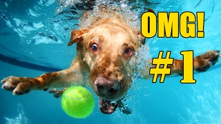 🐶 Funny Dog Videos OMG! - Compilation Part 1