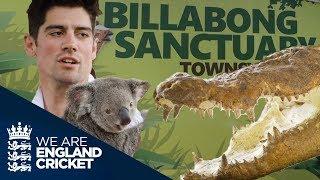 Video Crocs And Koalas: England Players Get Up Close With Animals At Billabong Sanctuary download MP3, 3GP, MP4, WEBM, AVI, FLV November 2017