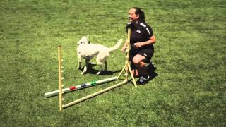 Dog Agility - Jumping: P5 Training App