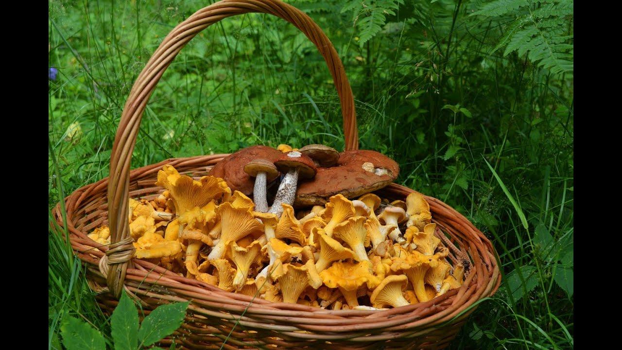 фото огромного гриба