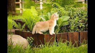 Смешные британские котята играют друг с другом, прятки в траве - Funny Cat Videos