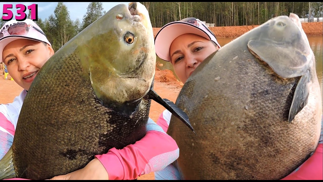Stella - Os Gigantes do novo lagão - Fishingtur na TV 531