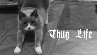 Cat vs Cucumber: Thug Life Edition