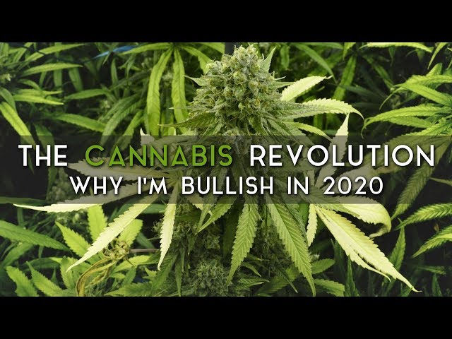 The Cannabis Revolution   Why the pendulum is swinging in 2020.