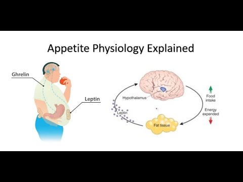 Apetite: Ghrelin and Leptin Explained