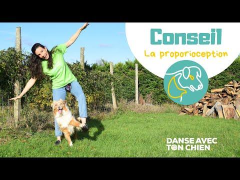 Qu'est ce que la proproception? Dog dancing
