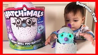Hatchimals Surprise Egg Hatching with a 1 Year Old Boy