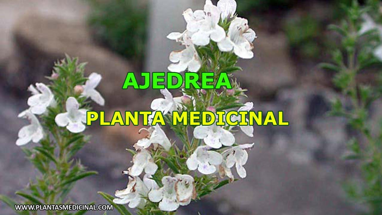Ajedrea propiedades y beneficios medicinales youtube for Planta decorativa propiedades medicinales