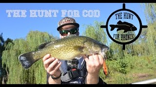 The Hunt For Murray Cod