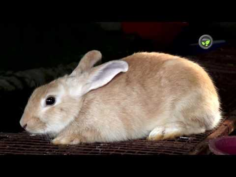 Benefits of Rabbit Farming, Climate, Housing and Cages