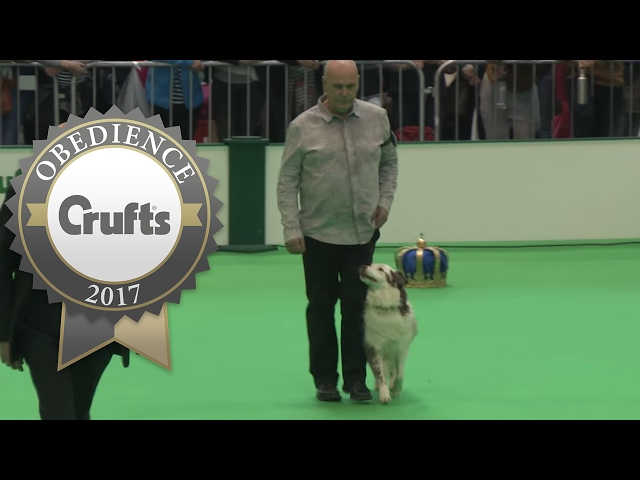 Obedience Championship - Dogs - Part 11 | Crufts 2017