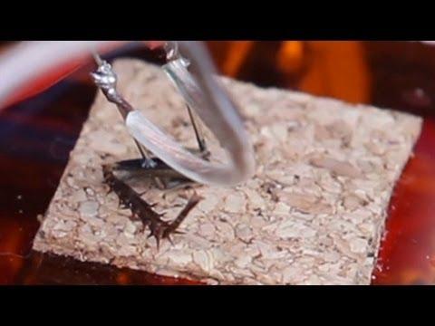 Watch An IPod Control A Cockroach Leg