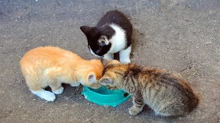 I have never seen such а cute and funny stray kittens