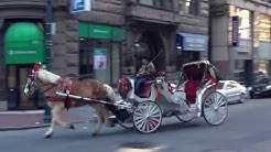Boston Horse and Carriage - January 2012