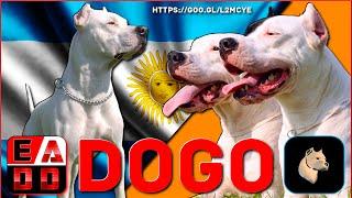 SUSCRIBETE! ➪ https://goo.gl/pgXrVe ✓   || #DogoArgentino #Dogo || ...