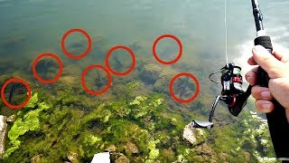 INSANE Micro Fishing for Crappies on Beds!!! (THEY EAT EVERYTHING)