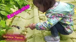Ants (Eylul Playing with Ants)