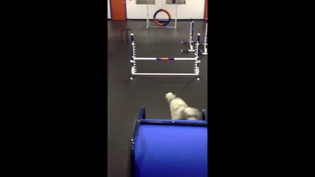 Zoom room campbell barkley and zoey enjoying private gym youtube