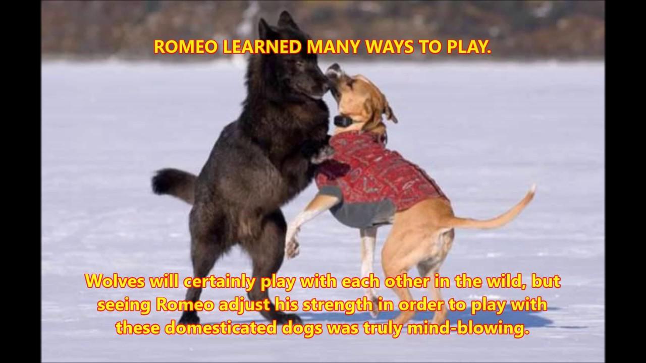 Red Dog True Story