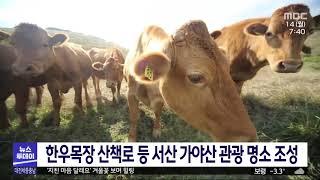 MBC뉴스 - 한우목장 산책로 등 서산 가야산 관광 명…