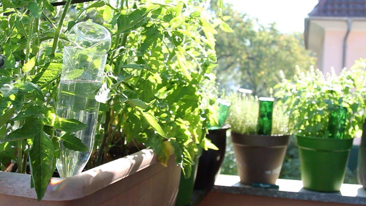 gartentipp: pflanzen bewässern mit pet-flaschen - youtube