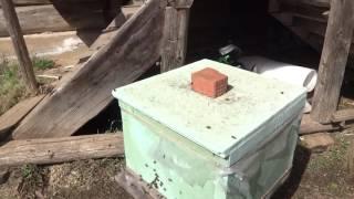 Последствия не правильной выставки пчел 4