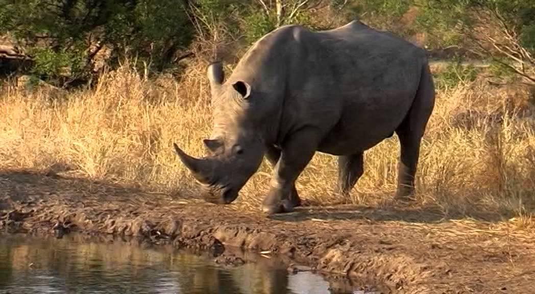 Africa Nature Training Youtube