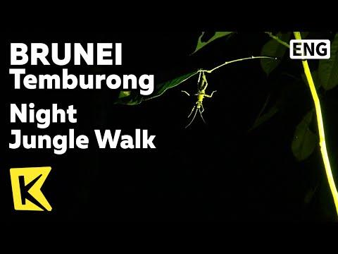 【K】Brunei Travel-Temburong[브루나이 여행-템부롱]템부롱 국립공원, 야간 트레킹/Night Jungle Walk/National Park/Long House