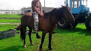 Как завести лошадь.