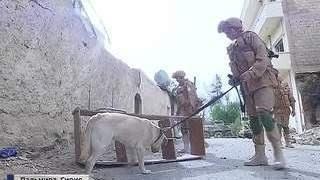 Пальмира: мины заложены почти в каждом доме