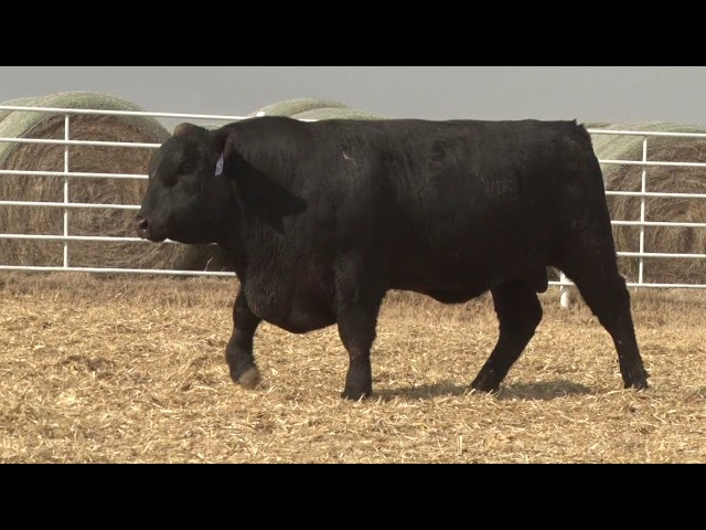 Express Ranches Lot 253