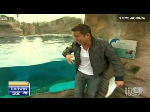 Pelican attacks TV Weatherman, Steve Jacobs [EPIC]