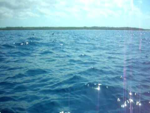 Bagno con i delfini a zanzibar 1 youtube - Bagno coi delfini ...