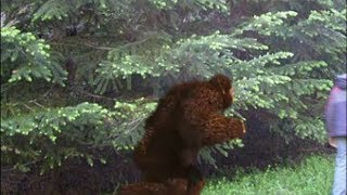 Girls Chased Like Truck By Bigfoot Off Mt. Rainer, Compelling Evidence Found