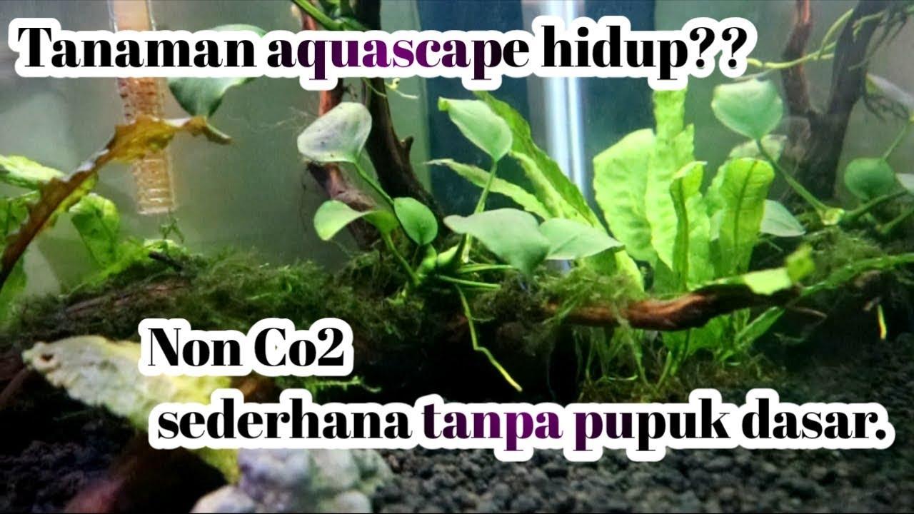 Cara membuat aquascape Tanpa Co2 dan pupuk dasar - YouTube