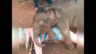Download Video Gajah Perkosa Wanita di Tempat Umum MP3 3GP MP4