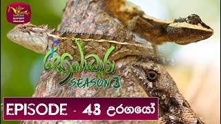 Sobadhara - Sri Lanka Wildlife Documentary | 2020-02-28 Thumbnail
