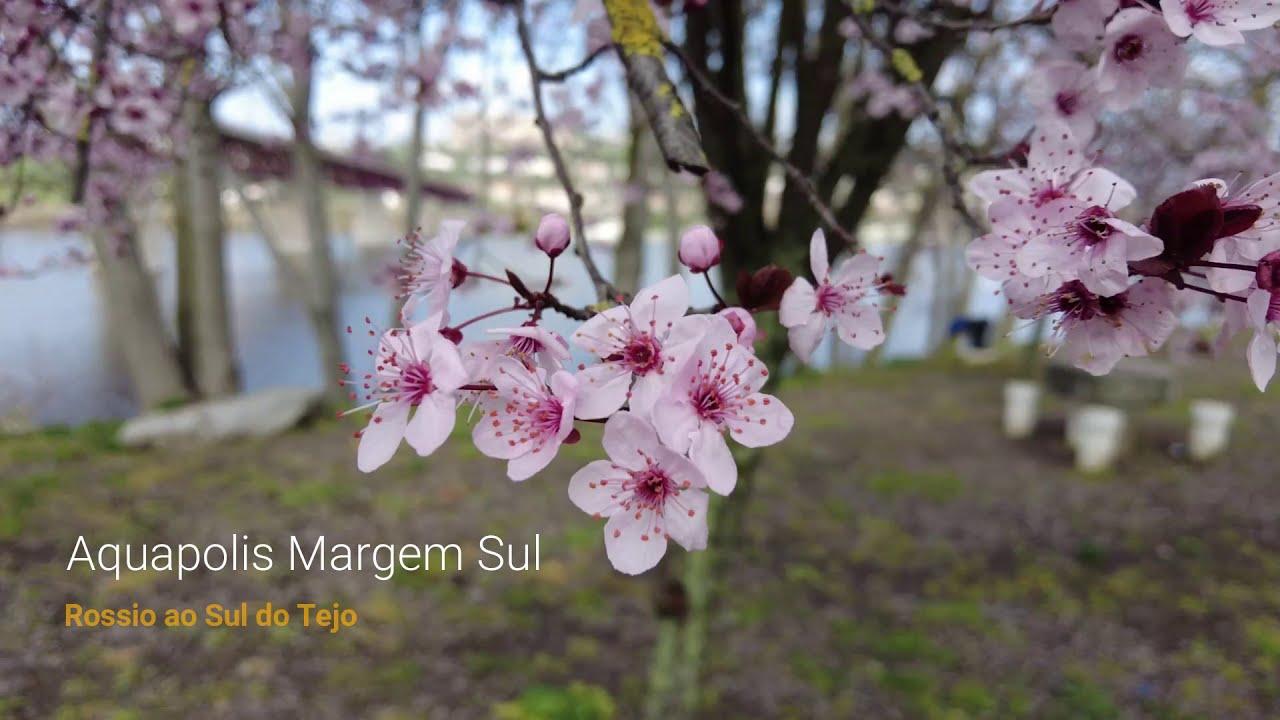 Prenúncio da chegada da Primavera