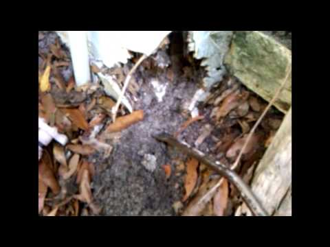 Termite Dangers With Stucco And Veneers