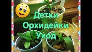 Детки Орхидейки Уход / Orchid seedlings(This video is about Orchid Seedlings. Как я ухаживаю за отростками орхидеями вы узнаете в этом видео. Полив, освещение, подко..., 2015-06-01T09:16:34.000Z)