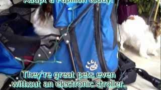 Greg's Electronic Papillon Stroller.mp4