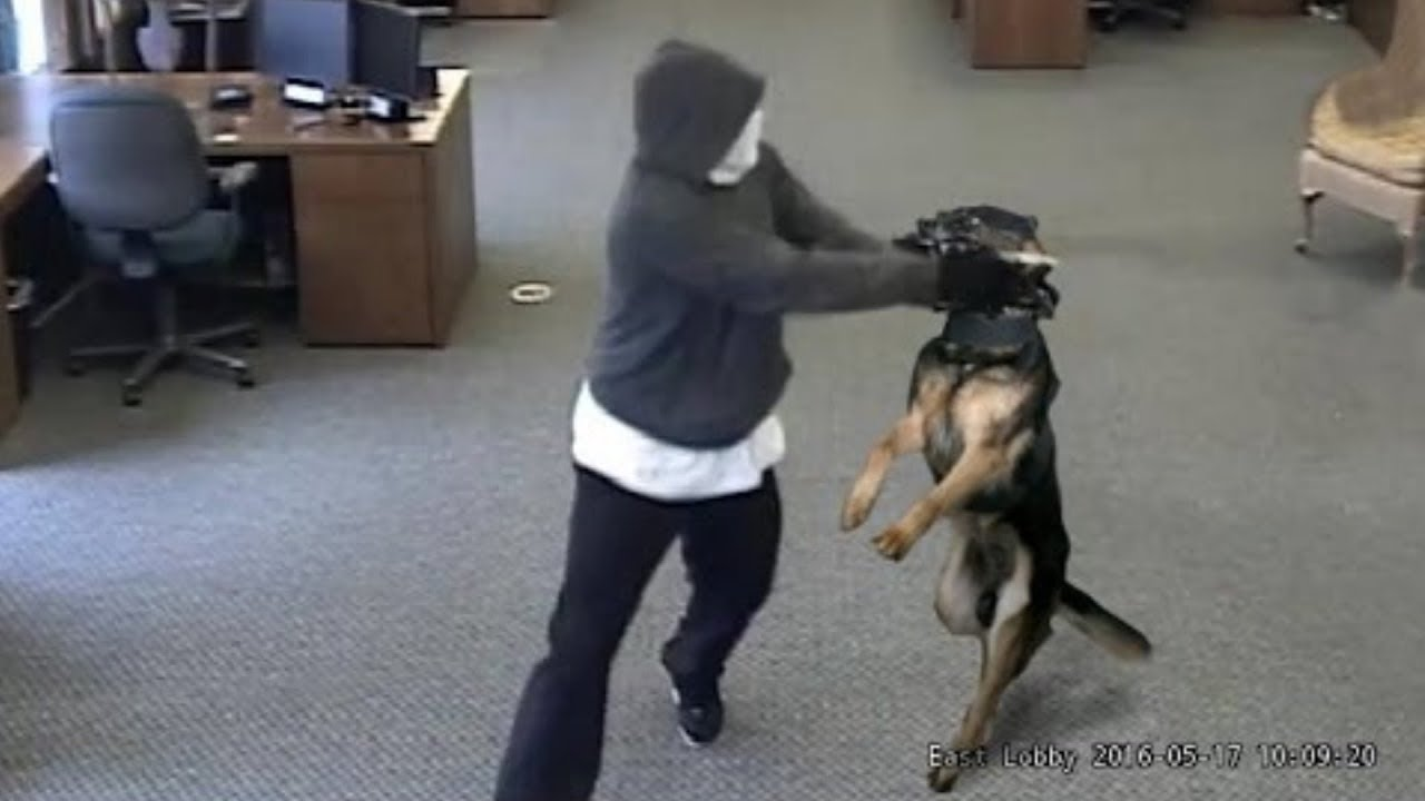 Extreme Trained & Disciplined Police Dogs