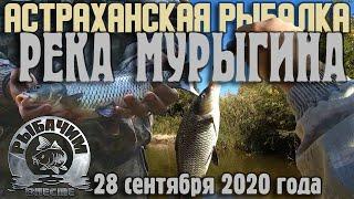 Рыбалка в Астраханской области Володарский район река Мурыгина Карась и сазан Осень 2020