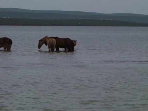 AP travel: A minute in Mongolia